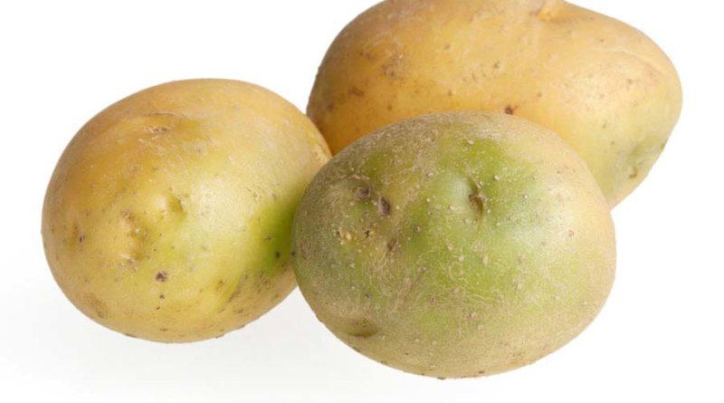 Опасен-ли-для-употребления-зеленый-картофель