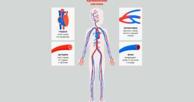Отличие вен от артерий