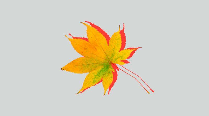 Почему листья меняют цвета осенью