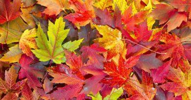 Почему-листья-меняют-цвета-осенью