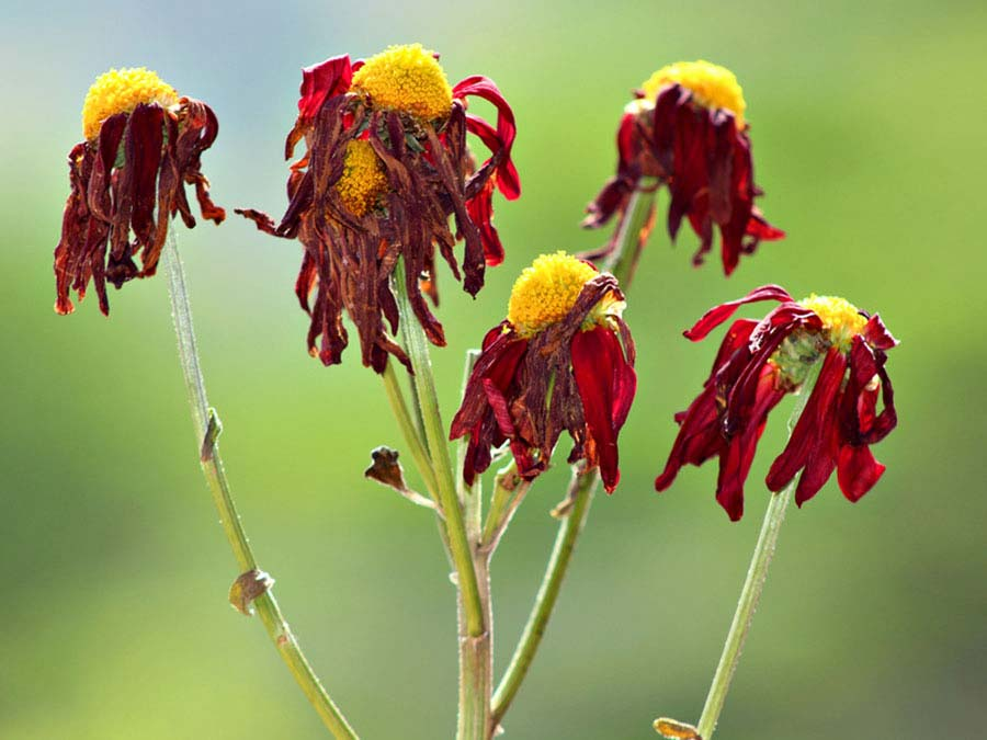 картинка умирающего растения расположены торговые
