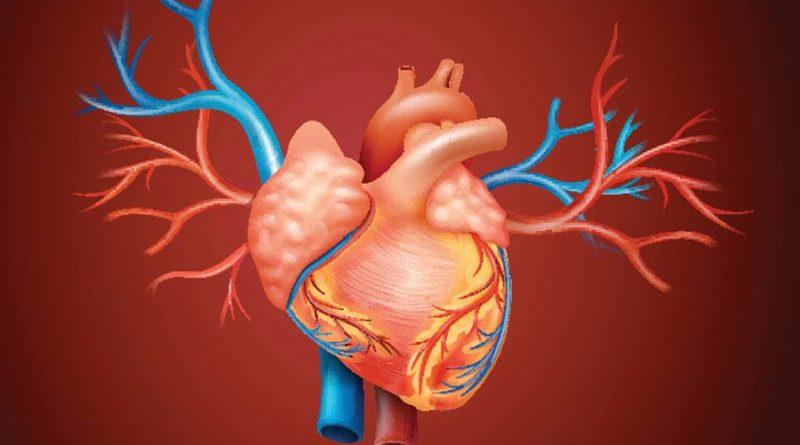 В-чем-разница-между-венами-и-артериями