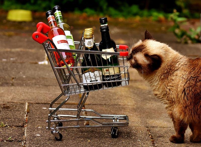 Покупка-алкоголя