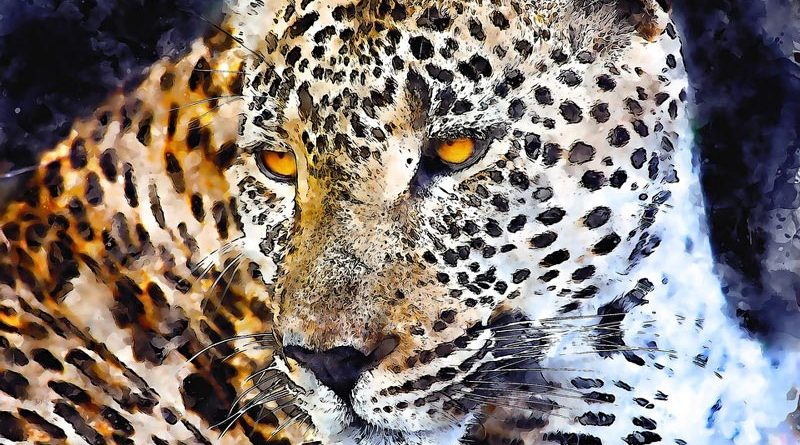 леопард и гепард